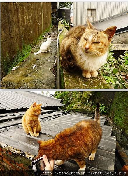 貓9.jpg