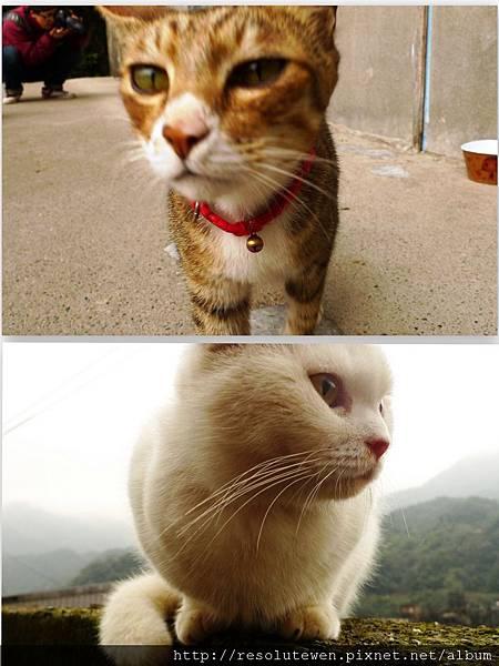 貓11.jpg