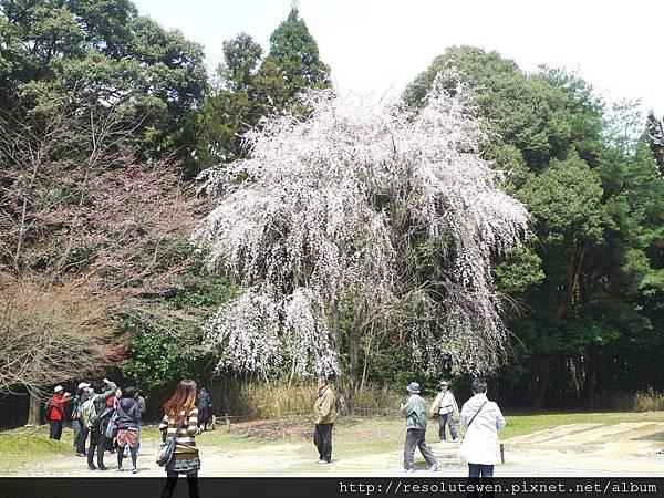 DAY2-醍醐寺069