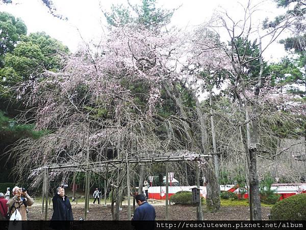 DAY2-醍醐寺081