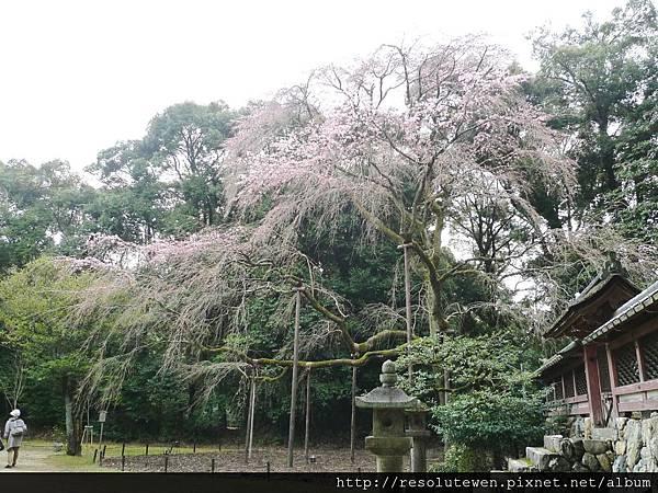 DAY2-醍醐寺083
