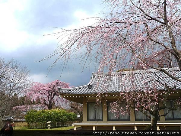 DAY2-醍醐寺098