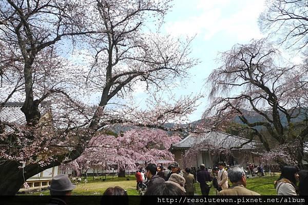 DAY2-醍醐寺101