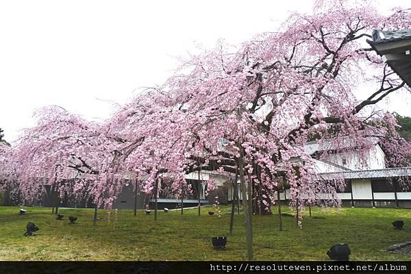 DAY2-醍醐寺114