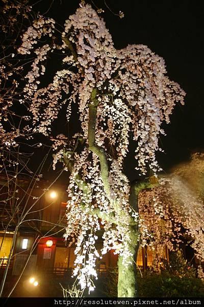 DAY2-白川南通夜櫻24