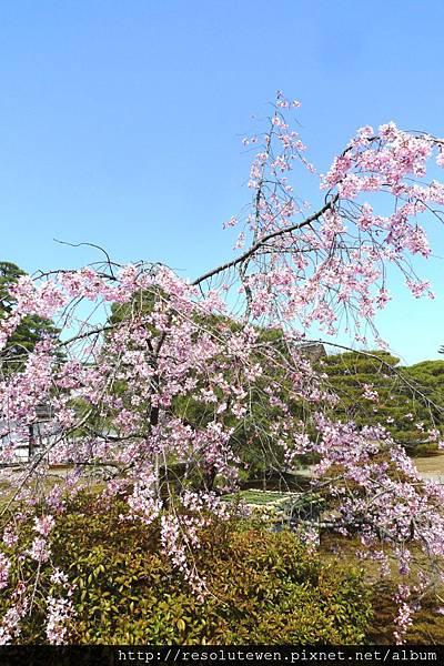DAY5-京都御苑93