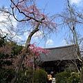800px-Tenryu-Ji_Sakura.jpg