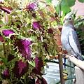 幼鳥配美葉