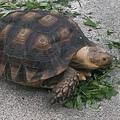 路邊奇遇1-陸龜