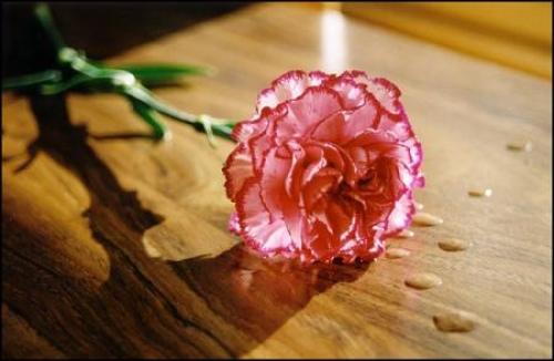 康乃馨在桌子上的照片-nb13963