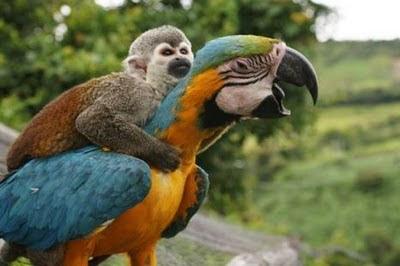 懶惰猴不爬樹 駕鸚鵡飛上天