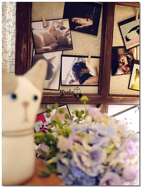 CAT X HOME婚佈 貓咪 聖凱&蓓嘉02.jpg