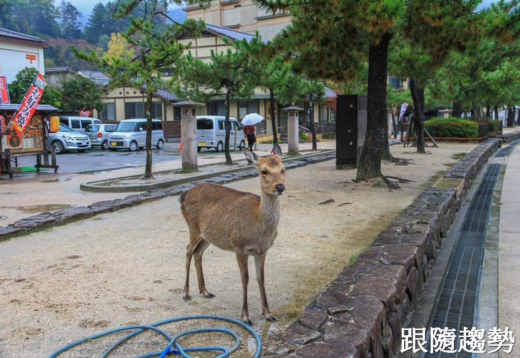 嚴島神社9601.jpg