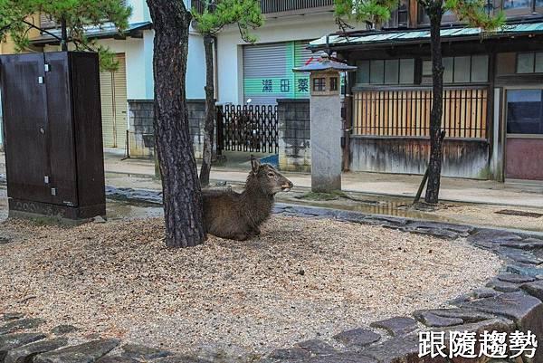 嚴島神社4301.jpg