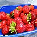 買了新鮮的草莓吃^^