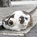 這是立賢在日本街頭遇見的二隻可愛喵