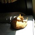 日光浴的喵仔