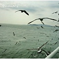 可怕的海鷗群來了