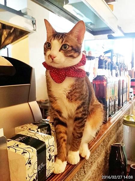 1050227-貓餐廳_9129.jpg