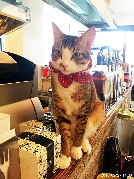 1050227-貓餐廳_4687.jpg