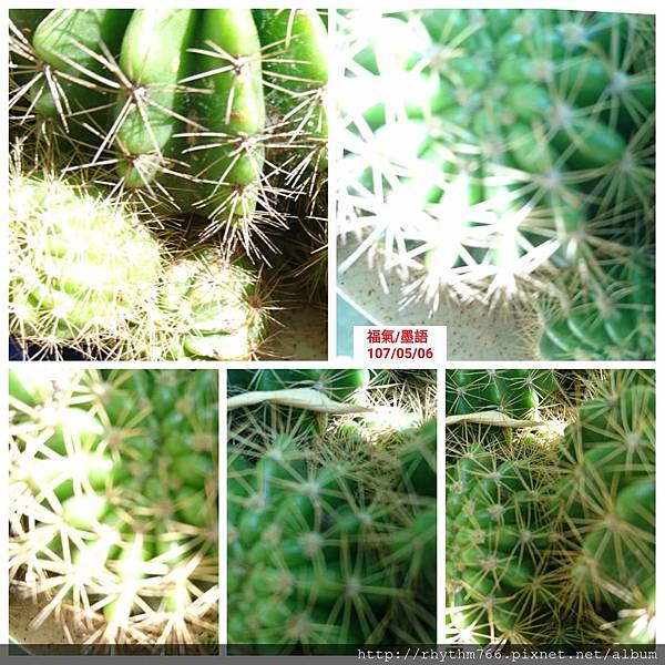 PhotoGrid_1525589495428