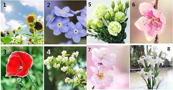 【性格測試】這8朵花選一朵,立馬測出你的性格,超準!!
