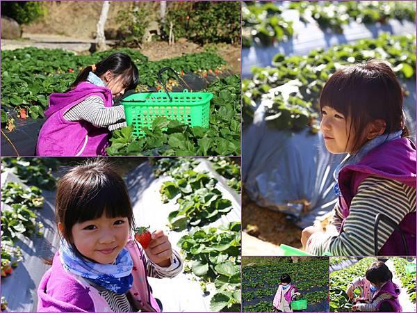 20141231_大湖草莓.jpg