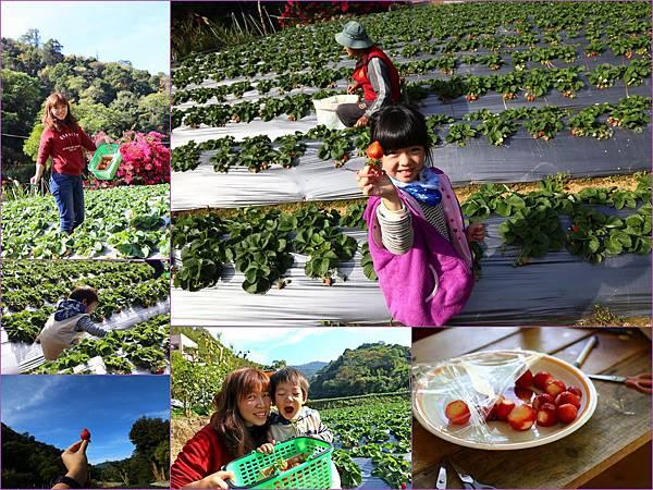 20141231_大湖草莓1.jpg