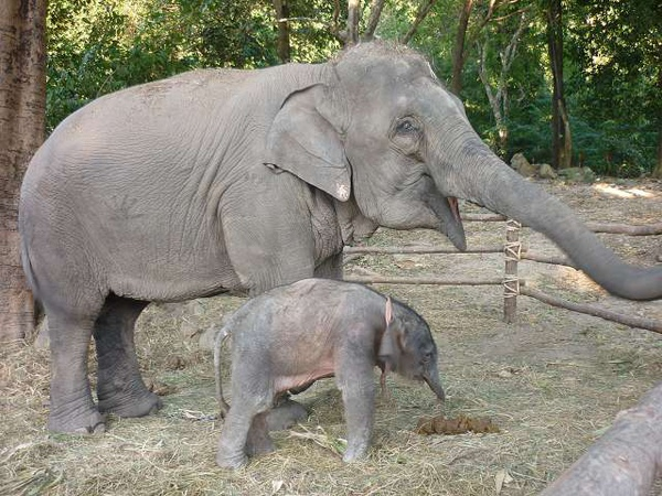 綠山國家動物園-大象.JPG