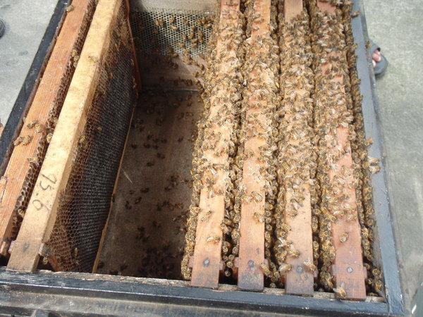 honey&bees