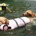 狗狗也有救生衣