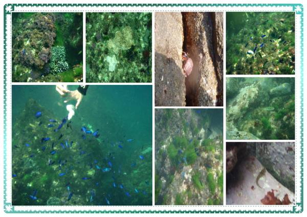 海底景觀.jpg