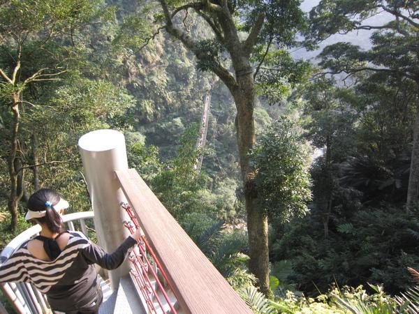 0981212-竹山天梯 (4).jpg