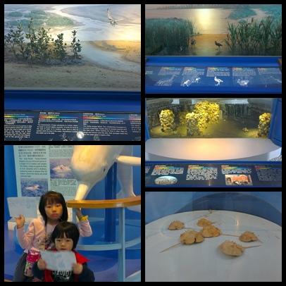 雙鯉濕地自然中心組合照片