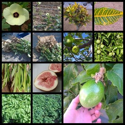 植物組合照片