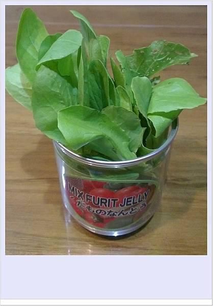 有機蔬菜1OK