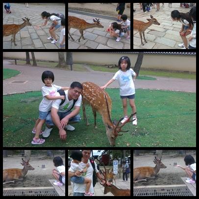 奈良梅花鹿公園組合照片