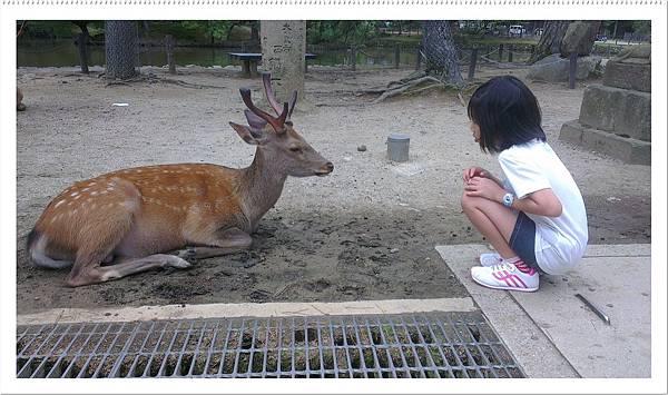 梅花鹿和軒軒的照片