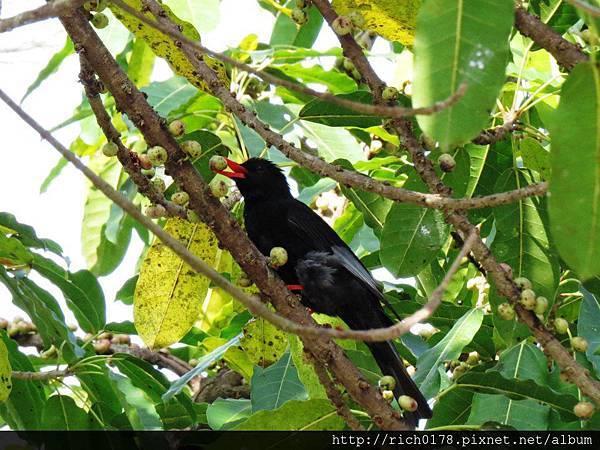 豐富的鳥類生態
