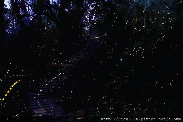 螢火蟲復育區(恆春生態農場提供)