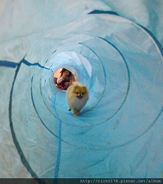 狗狗過山洞