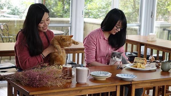 全台第一間飯店結合貓主題餐廳