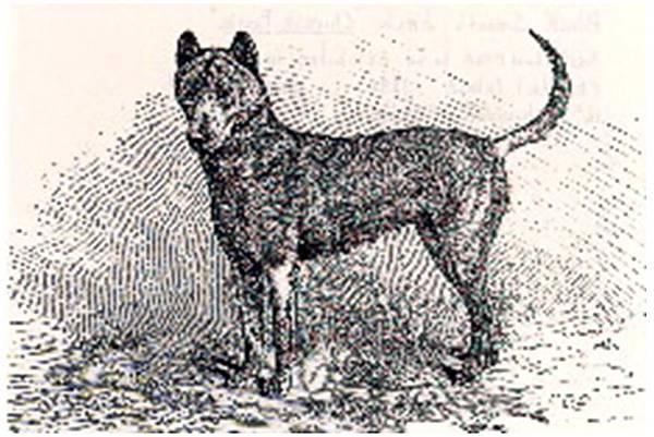 1880年的母鬆獅.jpg