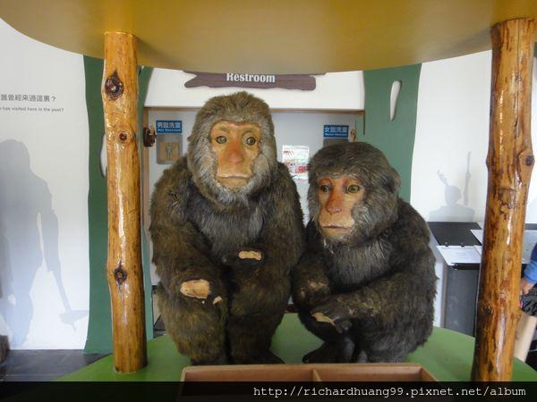 台灣獼猴.jpg