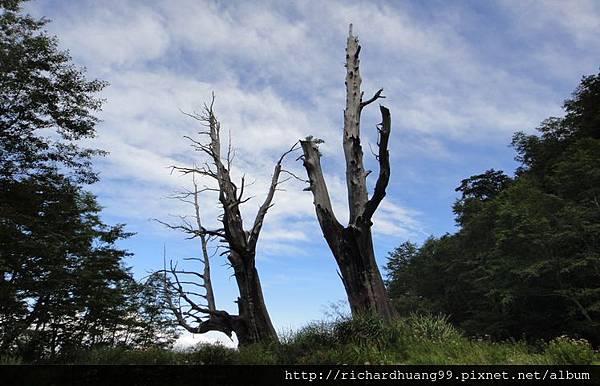 新中橫玉山景觀公路之夫妻樹
