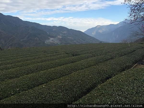 茶與山的對話