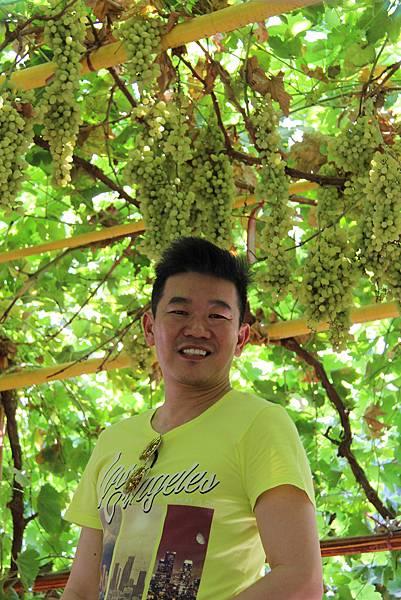 吐魯番葡萄園