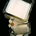 Siblings Houde法式手作精品烘培--法式醇香鮮奶酪