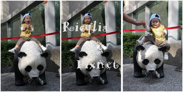 騎熊貓組合.jpg