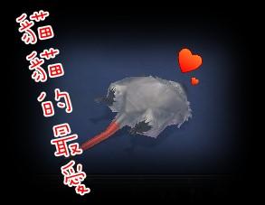 貓貓的最愛.jpg